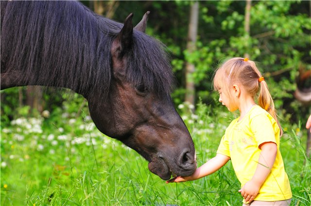 ippoterapi v truskavce_koni
