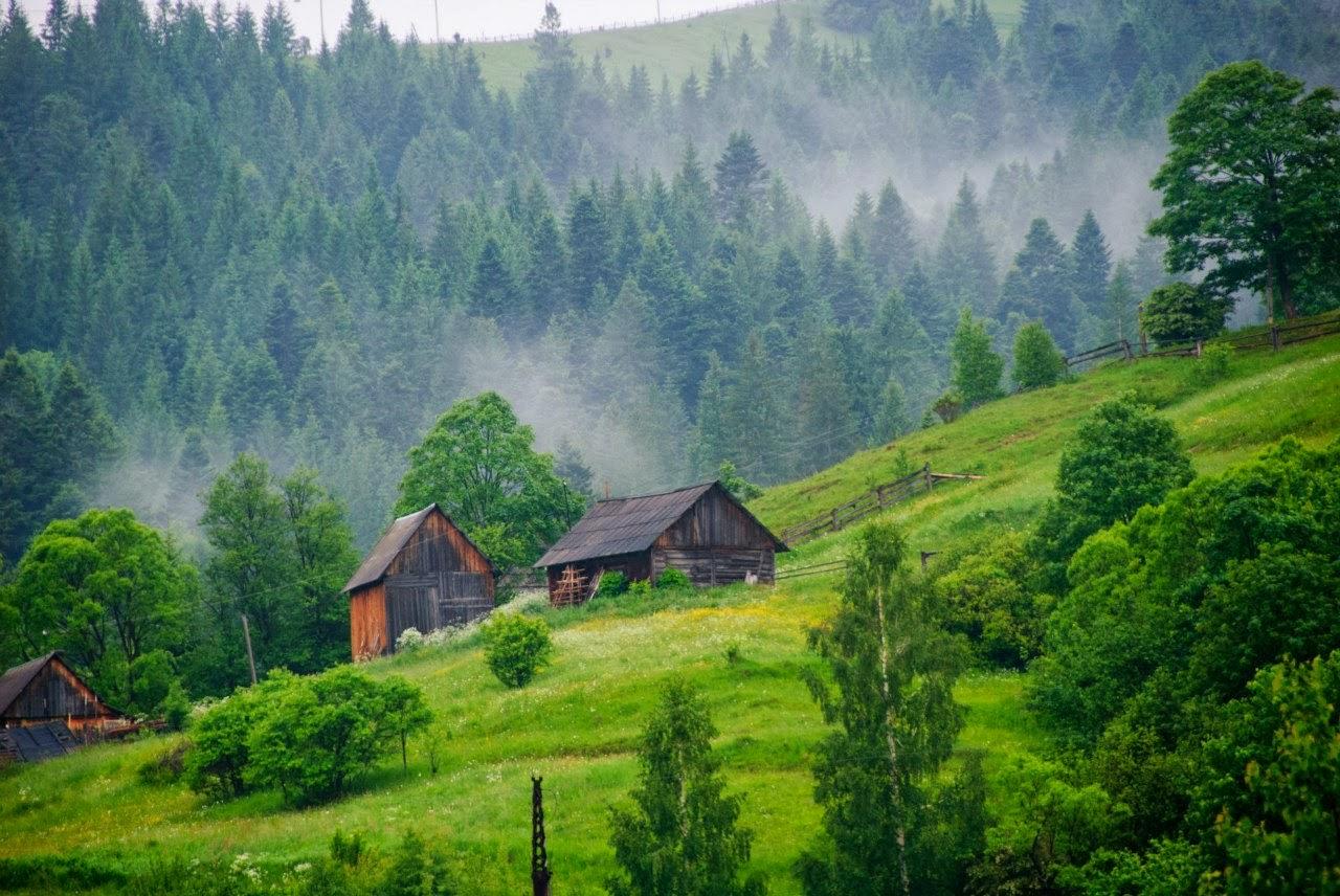 leto-v-Truskavce_les