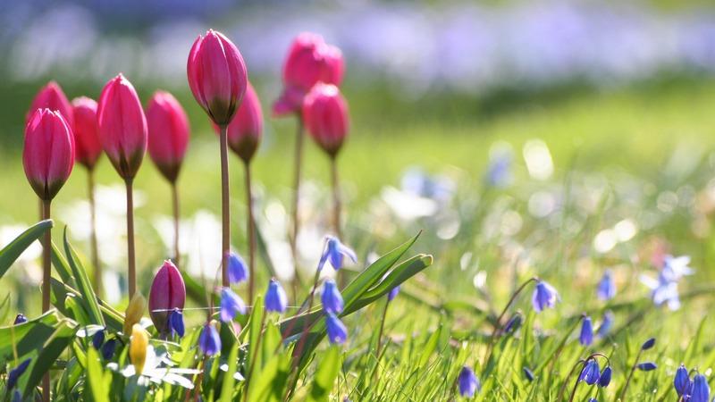 весна-о-151